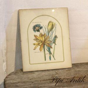 07 Retro billede af blomster i glasramme B23xH30 cm