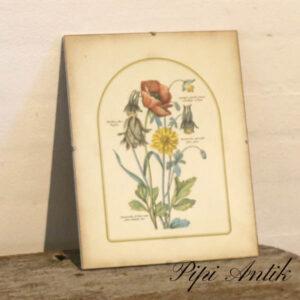 08 Retro blomsterbillede i glas ramme B24xH30 cm
