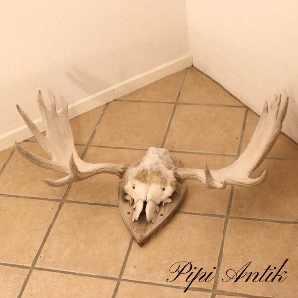 Hvid pleget elg giverer B100xD40xH46 cm meget tungt